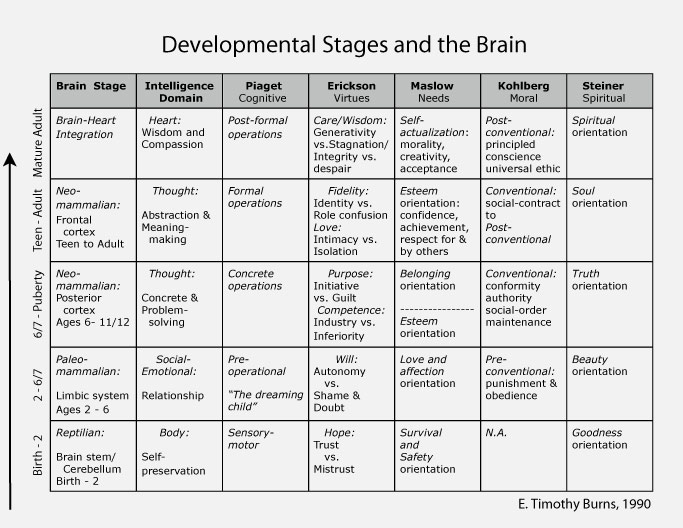 prenatal development stages essay writing